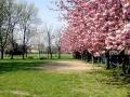Il Parco Nord adiacente all'Oca Grassa